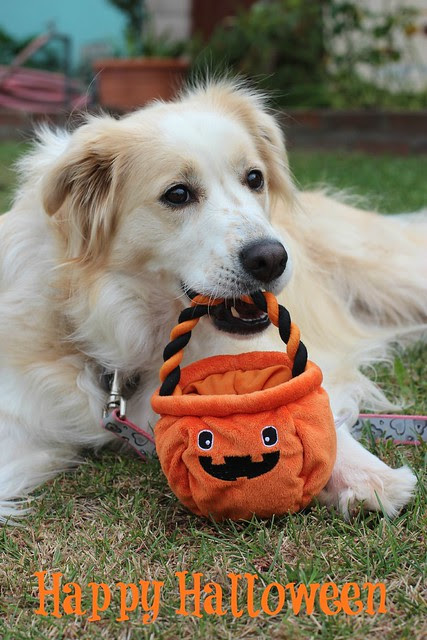Happy Halloween from Cidney the Girl Dog