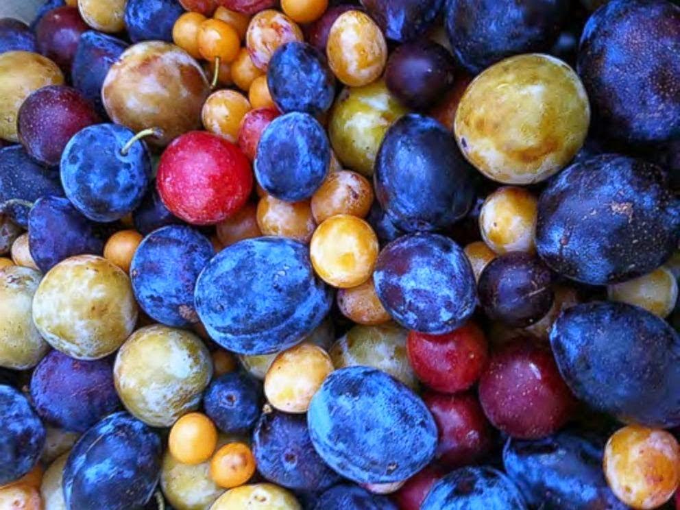 frutos diferentes en un mismo árbol
