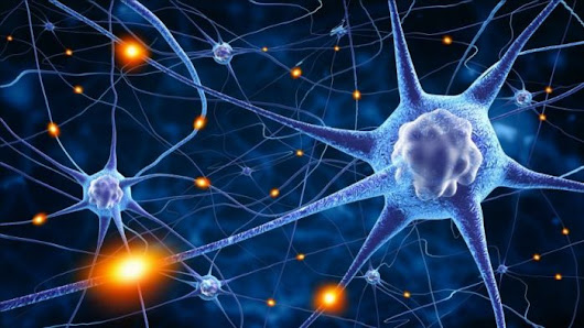 Top Neuroscience Graduate Programs Worldwide | HelpToStudy.com
