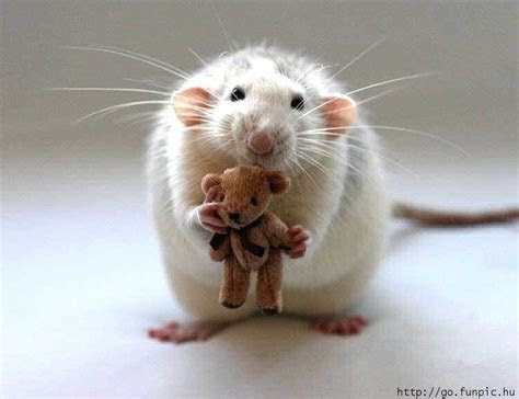 Funny Mouse. Photo by rafnadalbombon   Photobucket