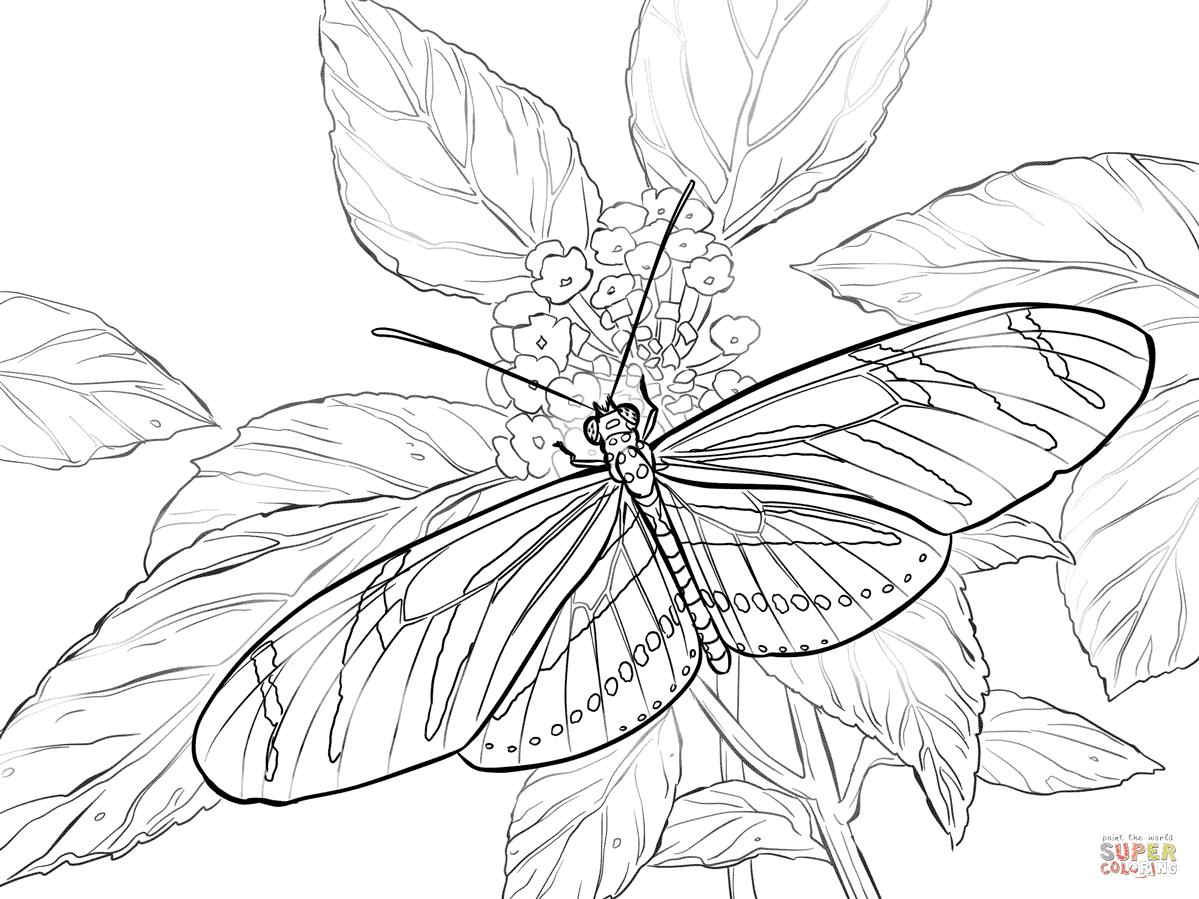 Dibujos De Mariposa Para Colorear Páginas Para Imprimir Y Colorear