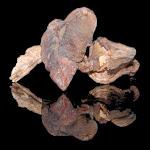 Porcini Mushrooms Dried 50 lb - My Spice Sage
