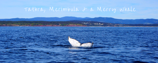 Tathra, Merimbula and a Merry Whale