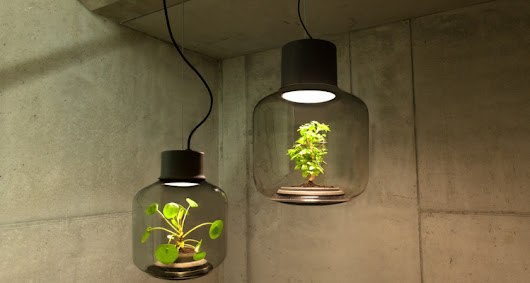 This glass lamp grows plants in windowless spaces without any human maintenance