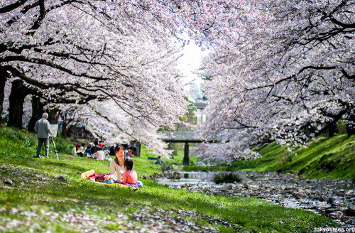 Top 6 Things to Do in Japan During Spring