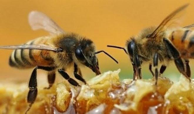 Слишком умные или слишком сильные: пара пчел сняла крышку с бутылки газировки
