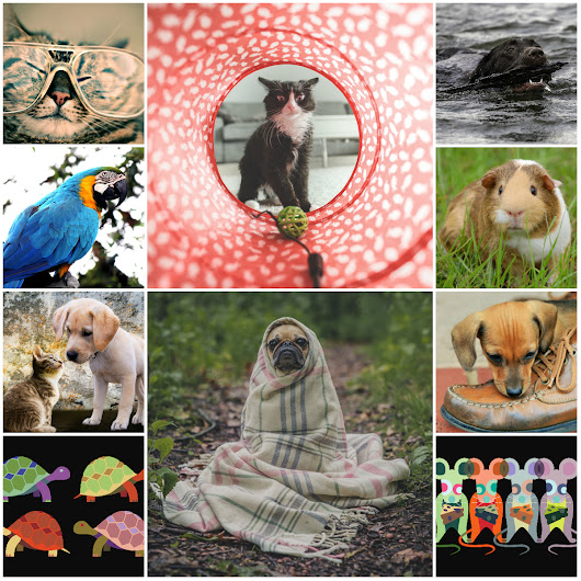 Motivation Mondays: Twenty Life Lessons Pets Teach Us