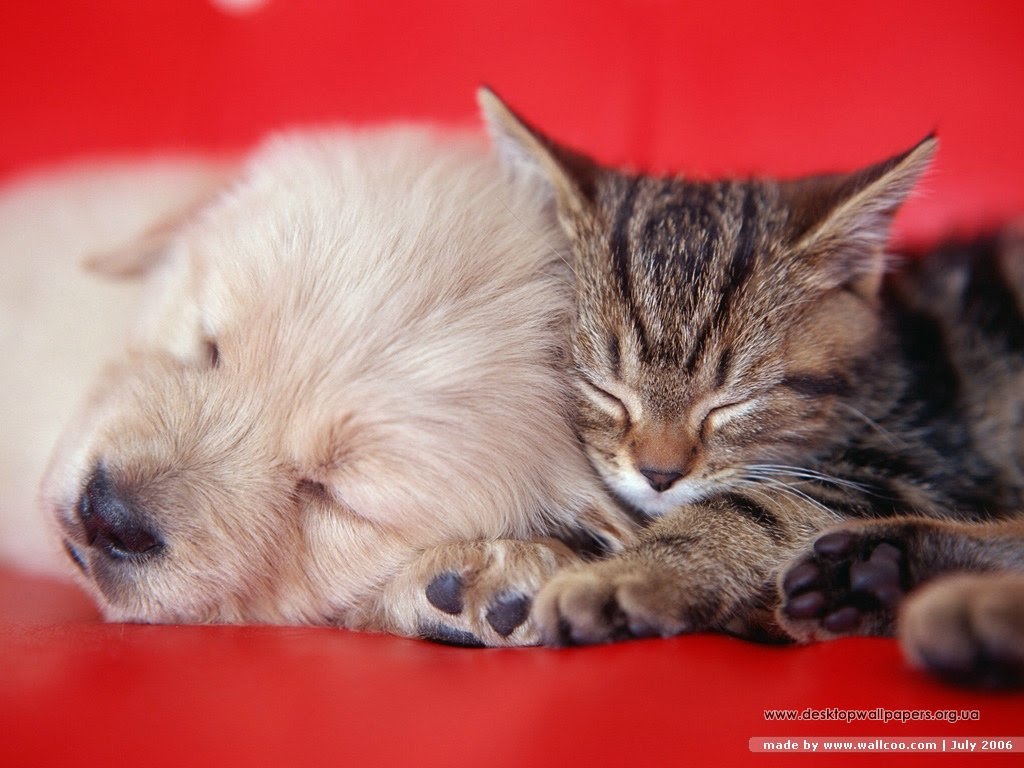 Wallpaper Photo Cat And Dog
