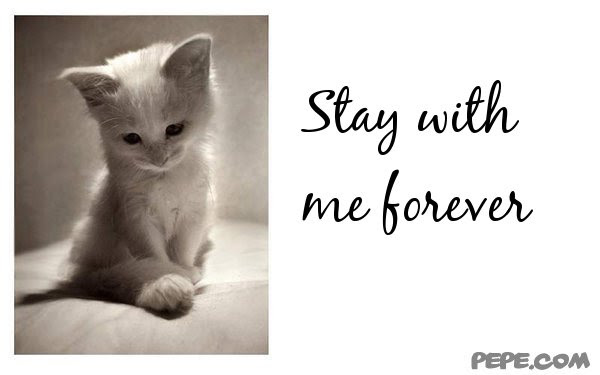 Quotes About Stay With Me Forever 33 Quotes