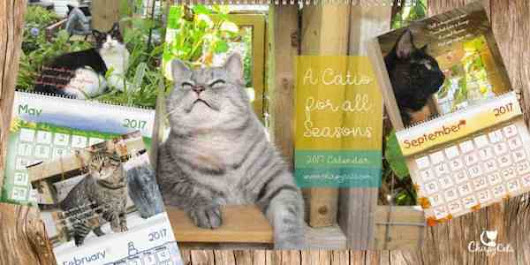 Cat Calendar that will help care for African ferals - Chirpy Cats