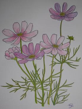 水彩塗り絵 コスモス うずまき月子の庭2 楽天ブログ