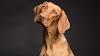 ¿Por qué los perros ponen ojos tristes?