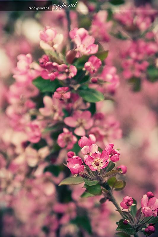 ~ 139/365 Spring ~