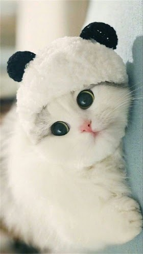 Kucing Lucu Bayi