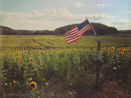 The Sussex County Sunflower Maze