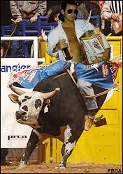highlife bull