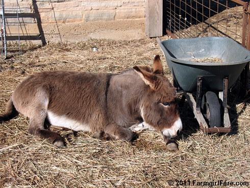 Donkey Doodle Dandy 2