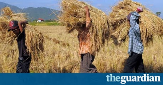 Are agricultural subsidies causing more harm than good? | Guardian Sustainable Business | The Guardian