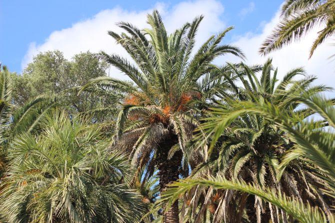 photo 14-jardin_porquerolles_ucpa_hyere_zpsd19315fb.jpg