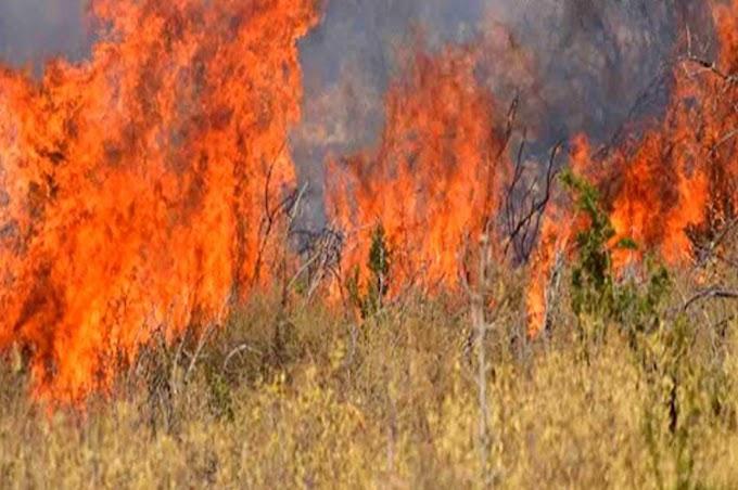Τριάντα εννέα δασικές πυρκαγιές το τελευταίο 24ωρο σε όλη την Ελλάδα