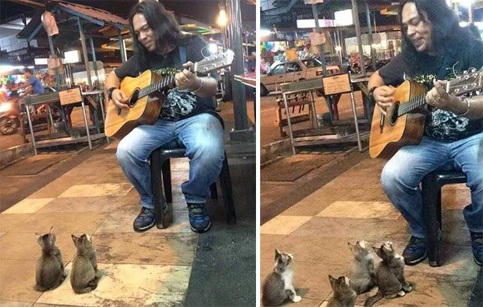 gatos-ouvem-som-musico