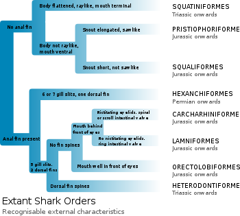 Identification of the 8 extant shark orders