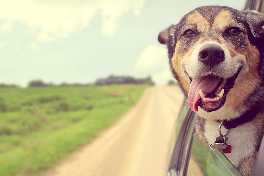 Do These Things to Make Your Car More Pet-Friendly