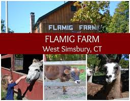 Farm «Flamig Farm», reviews and photos, 7 Shingle Mill Rd, West Simsbury, CT 06092, USA