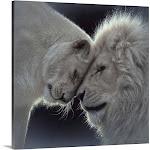 White Lion Love | Canvas Wall Art | 20x20 | Great Big Canvas