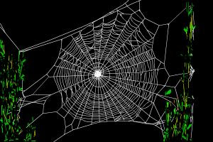 How To Draw A Realistic Spider Web