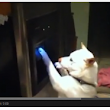 Dogs + Fridge Water Dispensers = Love - FridgeFilters.com