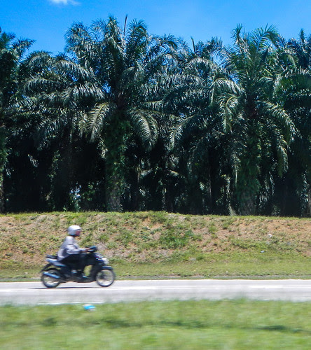 Motorcycle and Palm Trees