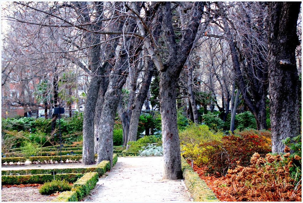 Botánico de Madrid en enero