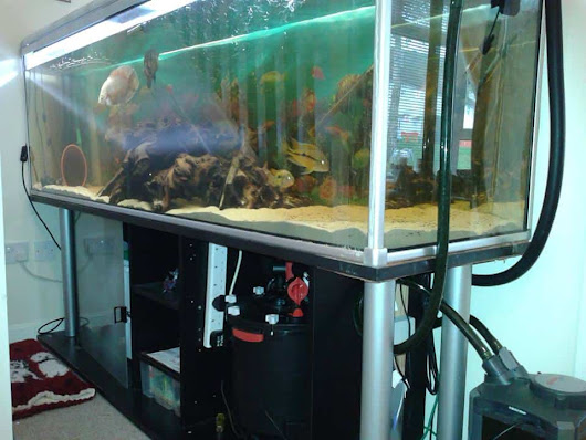 600 ltr Tank | Tropical Fish Site