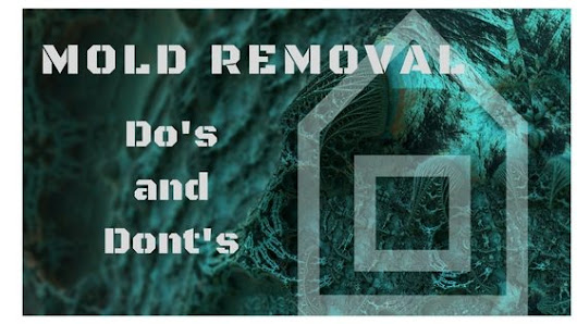 Mold Removal Do's and Don'ts | Water, Fire & Mold Damage Restoration Services