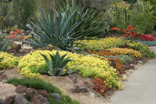 huntington succulent color