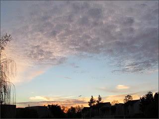 Sunrise with bird, 3/20/14
