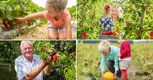 Year Round Guide to Fruit Picking in Suffolk County