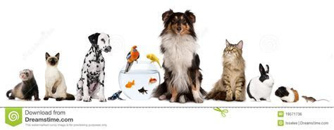 Group Of Pets Sitting In Front Of White Background Royalty Free Stock Image   Image: 19571736
