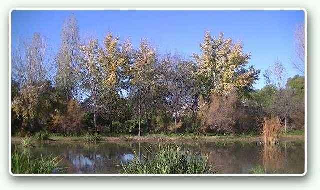 Parc de la Rambleta - Estany