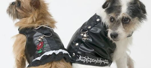 Biker Dog Clothes For The Open Road and Beyond