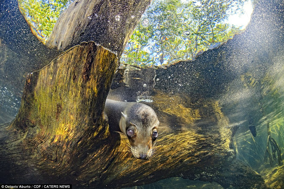The San Diego-based photographer and academic says he's probably the first human being the animals have ever seen. Above a curious sea lion