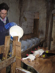 Austurhlíð mars 2006 048