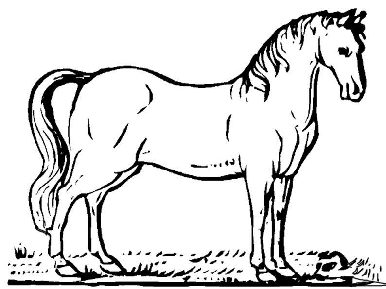 pferd zum ausmalen und drucken  tier malen