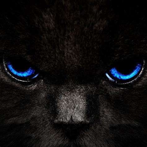 black cat  blue eyes ipad hd wallpapers high