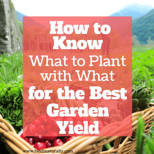 Better Garden Yield w/ Less Effort - Easy Companion Planting