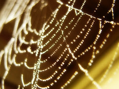 This spider thread picture from flickr is from Infinity Rain and has the nc-nd-2.0 license.