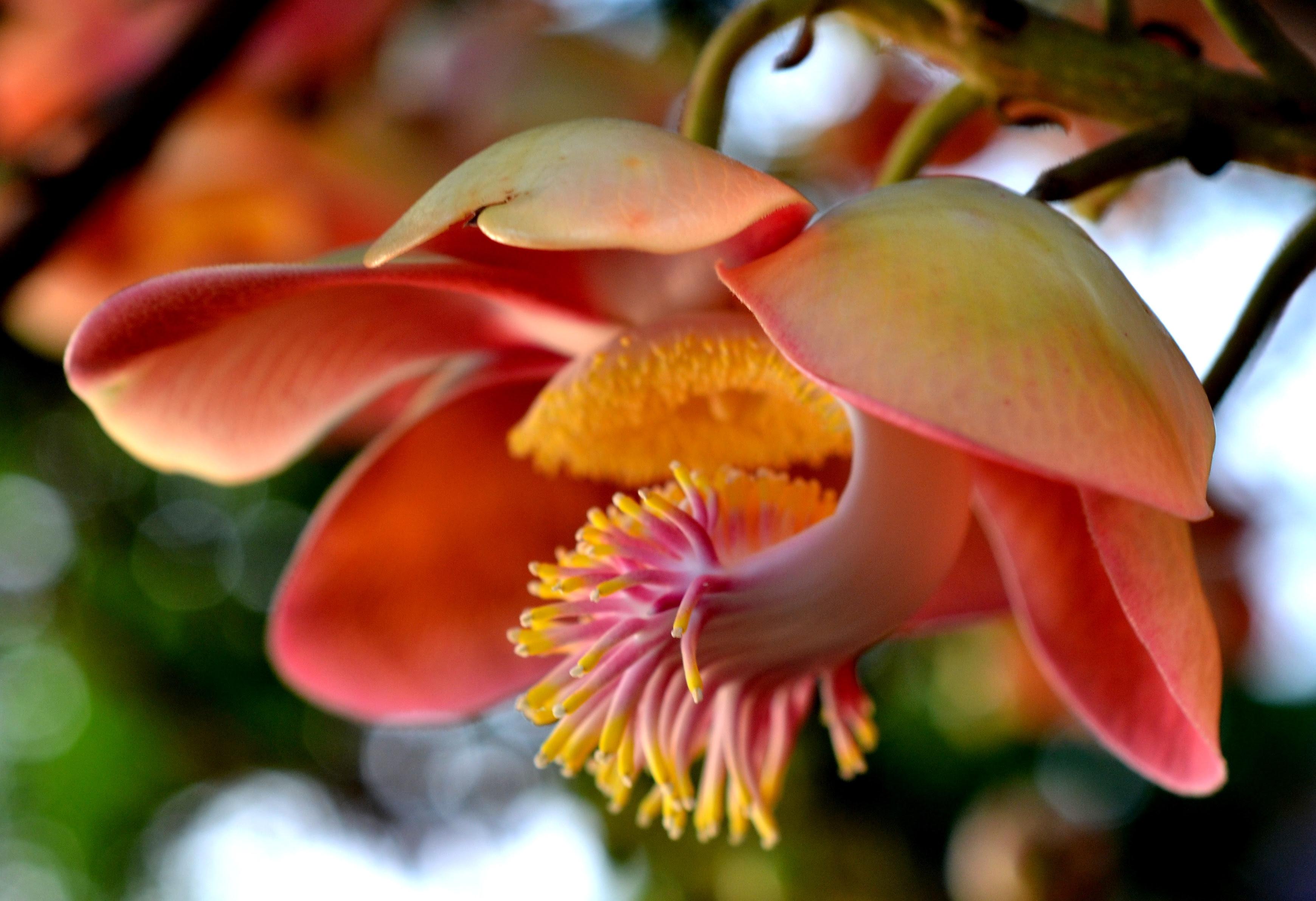 Plant Life Name In Marathi