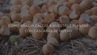 CÓMO AÑADIR CALCIO A NUESTRAS PLANTAS CON CASCARAS DE HUEVO