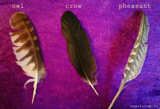 Pick a Feather for Your FREE Week Ahead Message ⋆ Angelorum - Tarot and Healing